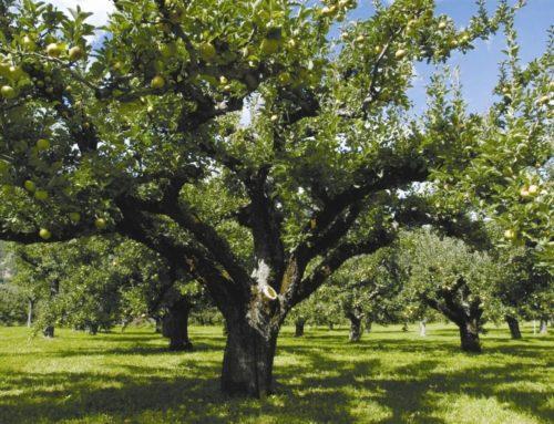 I Patriarchi da frutta
