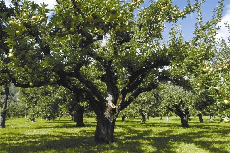 Patriarchi da frutta Ferrara