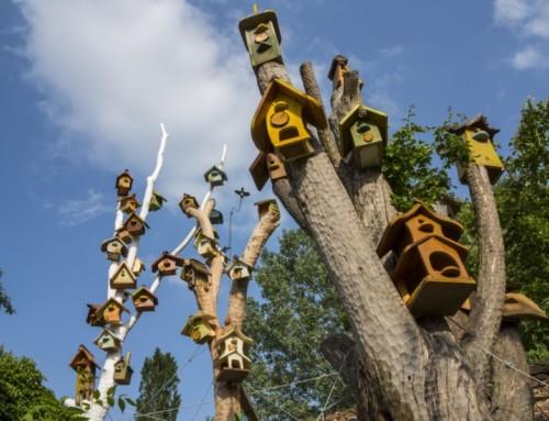 Il villaggio degli uccelli