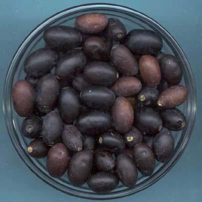 olivo di case gramonti