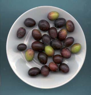 olivo di diolo