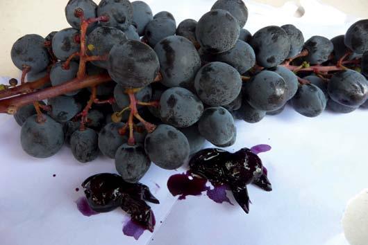vite prunella