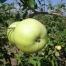 mela bolognola